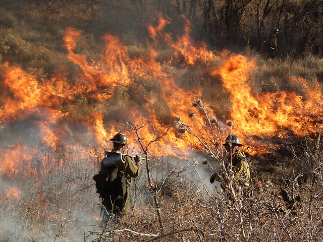 Wildland fire fighters battling fire