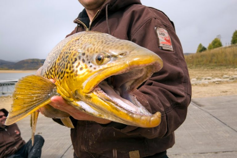 Tiger Trout caught at Scofield Reservoir